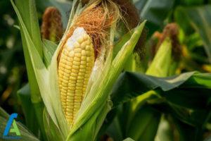 6 افزایش باردهی سبزیجات
