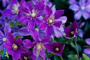 6 گل های ایمن برای افراد آلرژیک