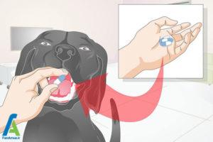 5 نحوه تیمار کردن سگ خانگی