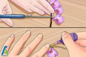 6 شینیون مو با گل طبیعی
