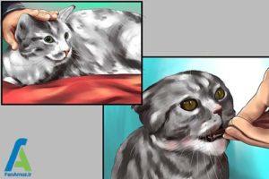 6 تزریق انسولین به گربه خانگی