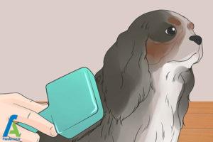 5 تربیت و نگهداری از سگ کوکر اسپانیل