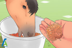 3 نحوه نگهداری از اسب مینیاتوری