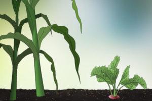 4 ساخت باغچه سبزیجات در خانه