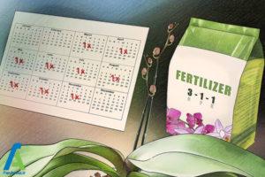 4 اصول نگهداری و پرورش گل ارکیده