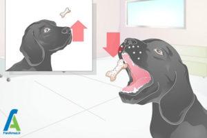 6 آموزش سگ برای نگهداشتن استخوان