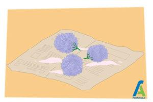 5 خشک کردن گل ادریسی