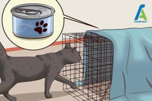 7 دور کردن گربه از خانه