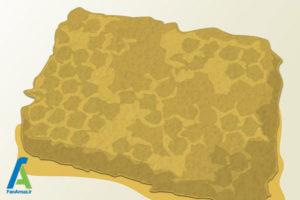 6 نحوه برداشت عسل