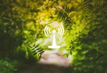 Photo of امواج رادیویی چگونه روی گل ها و درختان اثر می گذارد؟