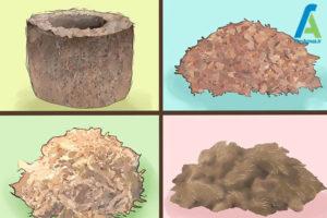 4 گیاه گوشتخوار نپنتس