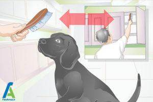 6 نحوه تیمار کردن سگ خانگی
