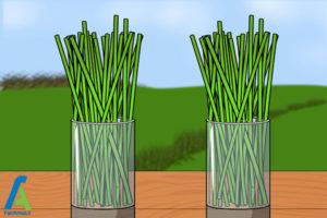 4 روشهای تسریع در رشد گیاهان