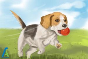4 لیس زدن سگ به انسان