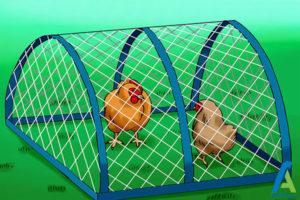 7 جلوگیری از بروز بیماری مرغ ها