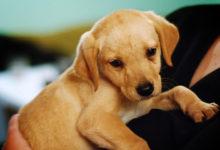 Photo of چگونه اضطراب و استرس سگ را کاهش داده و از بین ببریم؟