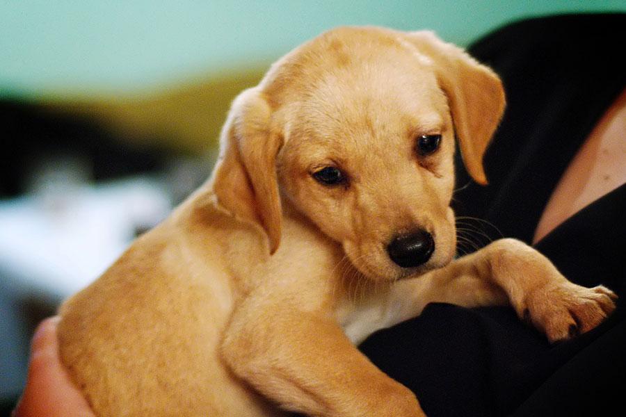 4 کاهش استرس و اضطراب سگ