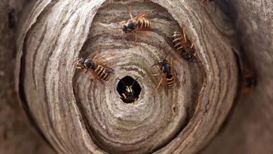 Photo of چگونه زنبورها را از اطراف خانه دور کرده و فراری دهیم؟