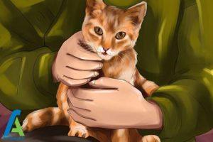 7 تزریق انسولین به گربه خانگی