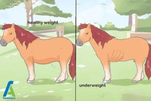 4 نحوه نگهداری از اسب مینیاتوری