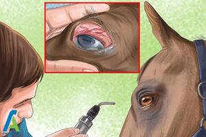 6 درمان مشکلات بینایی اسبها