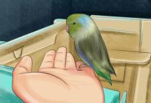 Photo of چگونه از طوطی پاسیفیک نگهداری کرده و به آن آموزش دهیم؟ | قسمت دوم