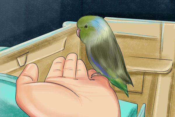 5 آموزش طوطی