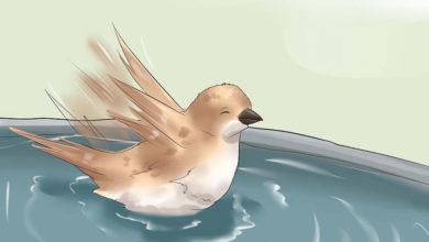 Photo of چگونه پرندگان خانگی را حمام کنیم؟