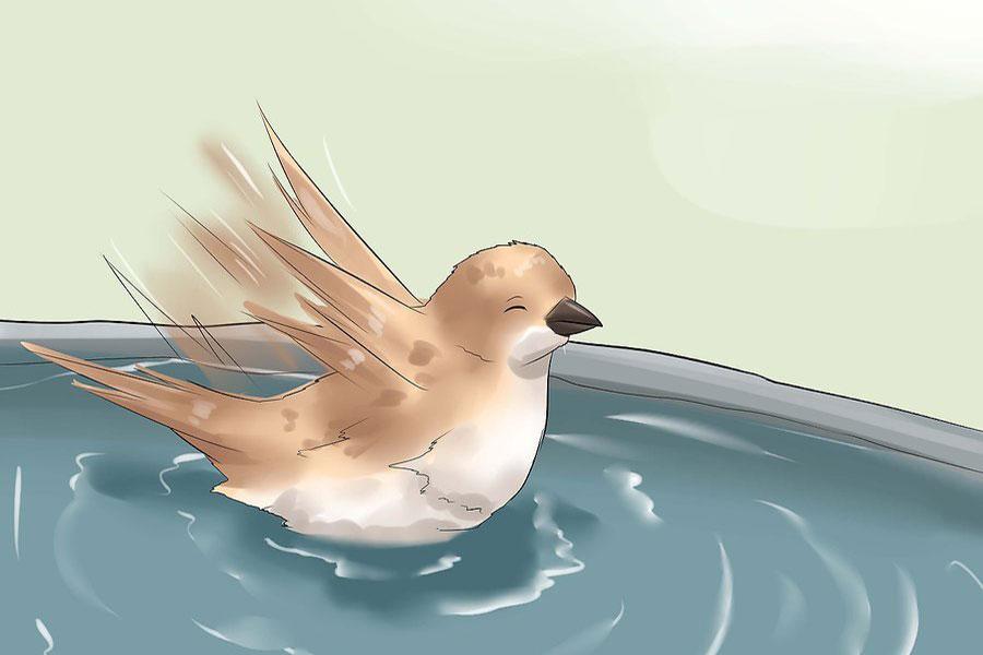 4 حمام کردن پرندگان خانگی