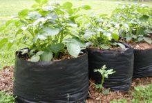 Photo of چگونه از کیسه های کشت گروبگ Growing bags استفاده کنیم؟