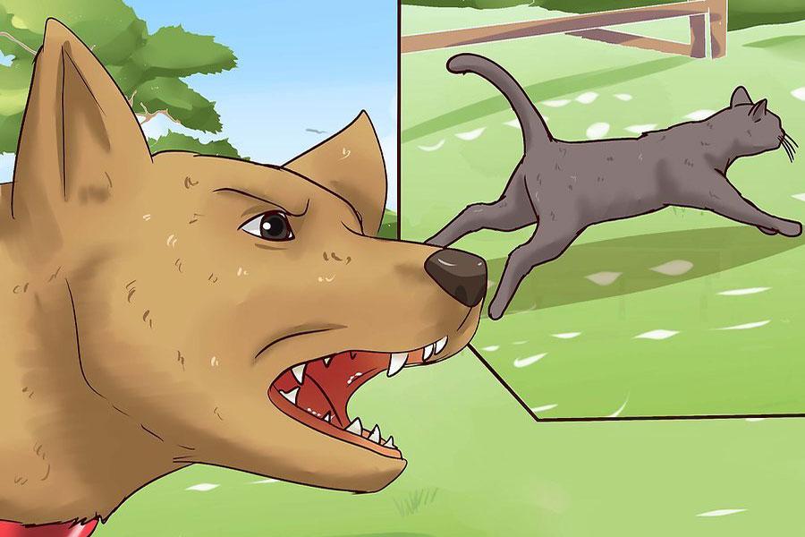 8 دور کردن گربه از خانه