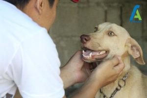 4 رام کردن سگ