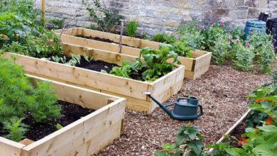 Photo of چگونه میزان باردهی و محصولات سبزیجات را افزایش دهیم؟
