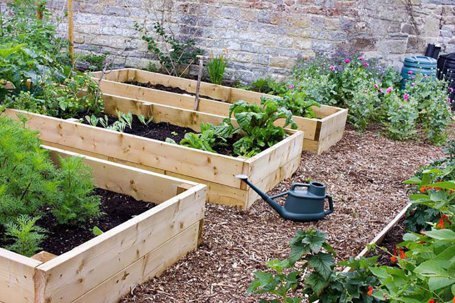 8 افزایش باردهی سبزیجات