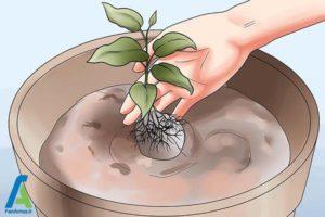 6 پرورش گل کلماتیس در گلدان