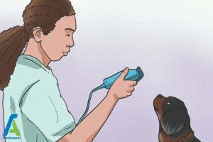 7 تربیت و نگهداری از سگ کوکر اسپانیل