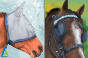 7 درمان مشکلات بینایی اسبها