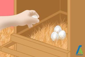 7 جلوگیری از خورده شدن تخم مرغها