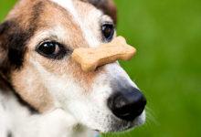 Photo of آموزش ترفند هایی به سگ برای نگهداشتن استخوان روی بینی