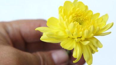 6 خشک کردن گل ها