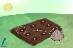9 پرورش گل گلایول