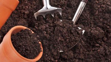 Photo of چگونه خاک یا کمپوست را با اضافه کردن نیتروژن تقویت کنیم؟