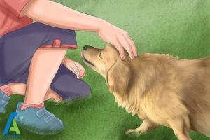 5 لیس زدن سگ به انسان