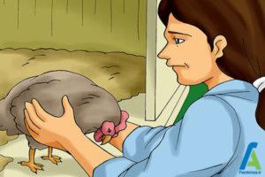 9 جلوگیری از بروز بیماری مرغ ها