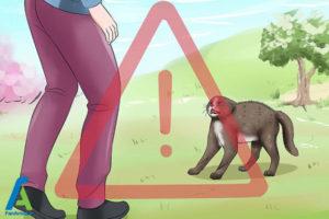9 اصول صحیح بغل کردن و حمل گربه