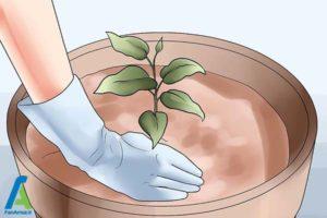 7 پرورش گل کلماتیس در گلدان