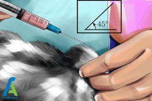 9 تزریق انسولین به گربه خانگی