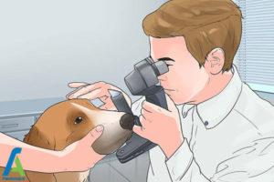 8 تربیت و نگهداری از سگ کوکر اسپانیل