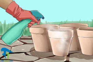 1 استفاده از هیدروژن پراکسید برای گل و گیاه
