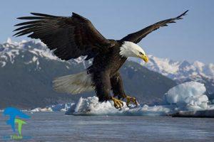 1 روش نگهداری طولانی اجزای بدن پرندگان